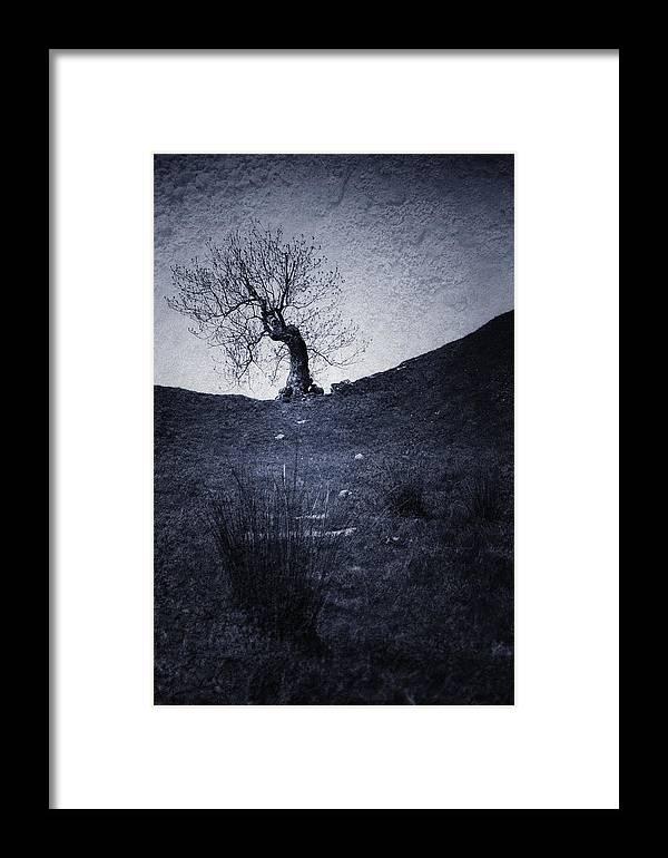 Afraid Framed Print featuring the digital art Tree by Svetlana Sewell