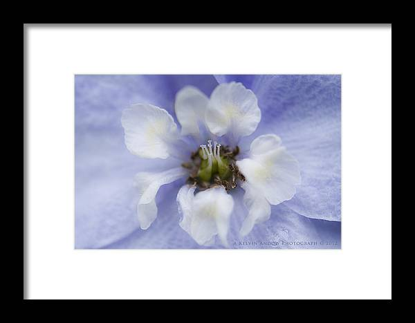 Flower Framed Print featuring the photograph Flower by Kelvin Andow