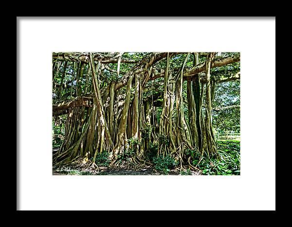 Christopher Holmes Photography Framed Print featuring the photograph 20120915-dsc09882 by Christopher Holmes