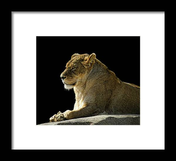 Animal Framed Print featuring the photograph 2437 by Peter Holme III