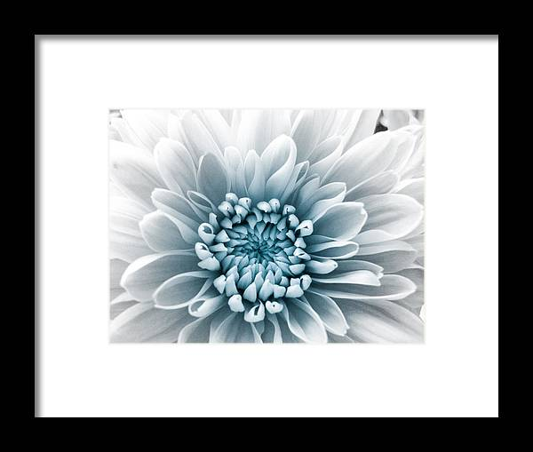 Blue Flower Framed Print featuring the photograph Blue Flower by Dawn OConnor
