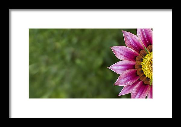 Flower Framed Print featuring the photograph Bright by Rebecca Cozart