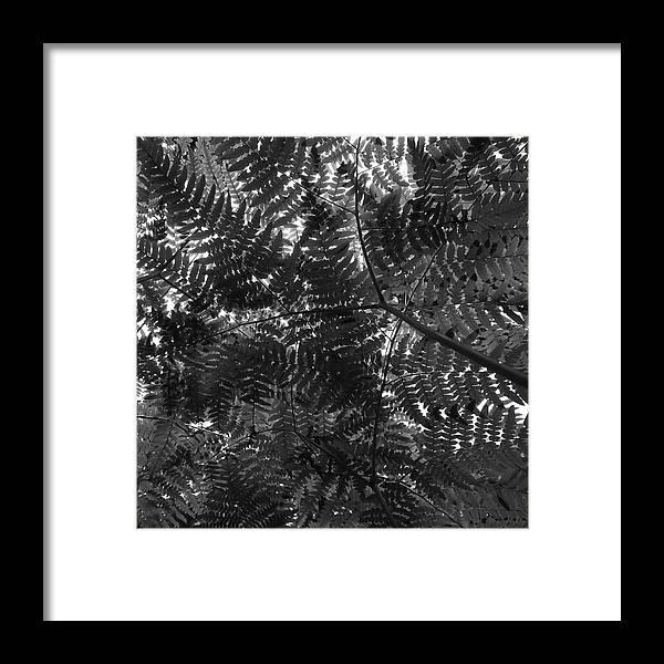 Lehtokukka Framed Print featuring the photograph Ferns by Jouko Lehto
