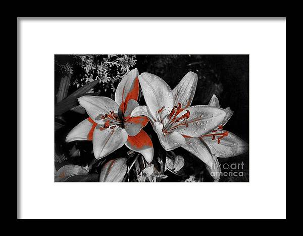 Flowers Framed Print featuring the photograph 3 Flowers by Claire Reilly