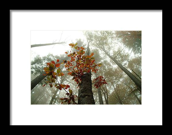 Nature Framed Print featuring the photograph Foggy Autumn Beech Forest by Ulrich Kunst And Bettina Scheidulin