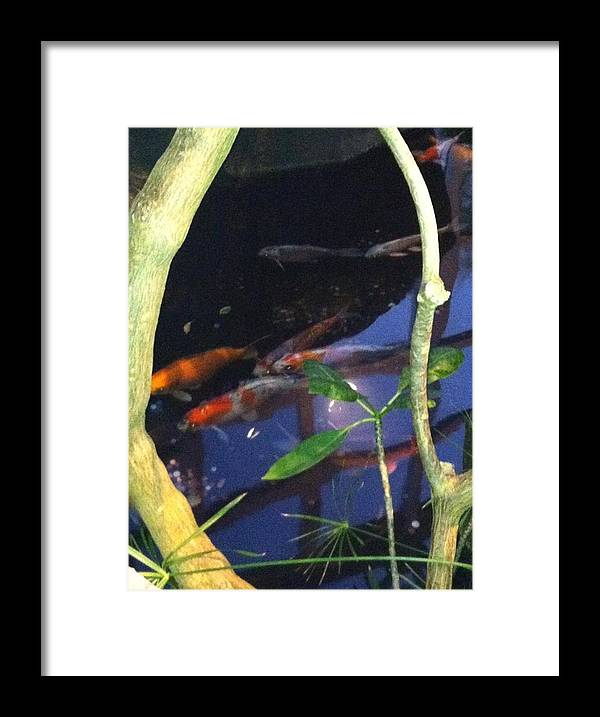 Water Framed Print featuring the photograph Franklin Park Conservatory by Jill Parsons