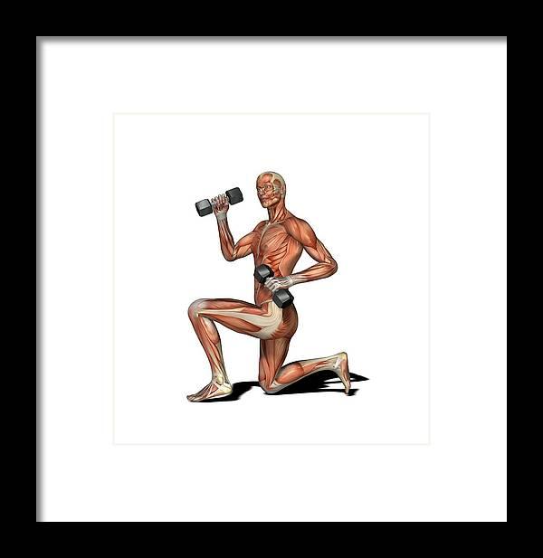 Human Framed Print featuring the photograph Male Muscles, Artwork by Friedrich Saurer