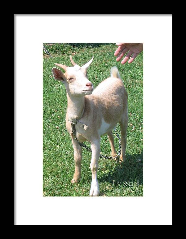 Goat Framed Print featuring the photograph Smile by Marlene Robbins