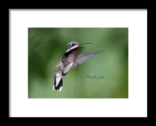 Thank You Framed Print featuring the photograph Thank You Card by Travis Truelove