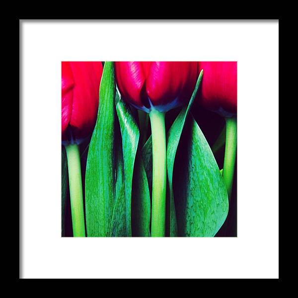 Tulips Framed Print featuring the photograph Instagram Photo by Ritchie Garrod