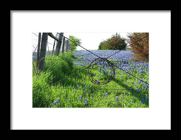 Bluebonnets Framed Print featuring the photograph Ennis Tx Bluebonnet Trails by Mike Witte