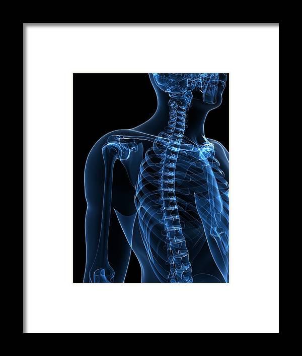 Vertical Framed Print featuring the digital art Upper Body Bones, Artwork by Sciepro