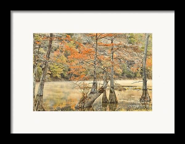 Landscape Framed Print featuring the photograph Cypress Trees In The Mist by Iris Greenwell