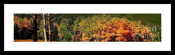 Fall Aspens<image Framed Print featuring the photograph Fall Aspens by Patrick Short