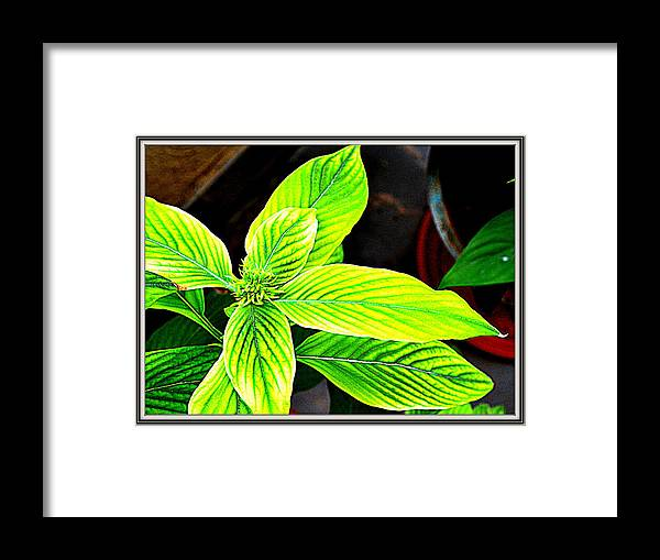 Leaves Framed Print featuring the photograph Leaves by Anand Swaroop Manchiraju