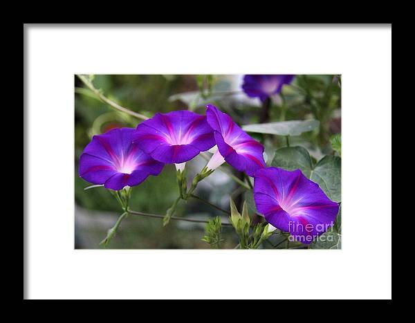 Flowers Framed Print featuring the photograph 4 Purples by Yumi Johnson