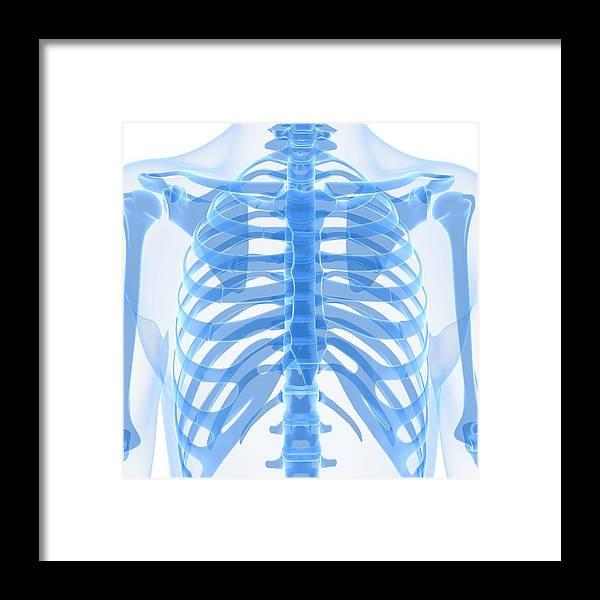 Square Framed Print featuring the digital art Upper Body Bones, Artwork by Sciepro