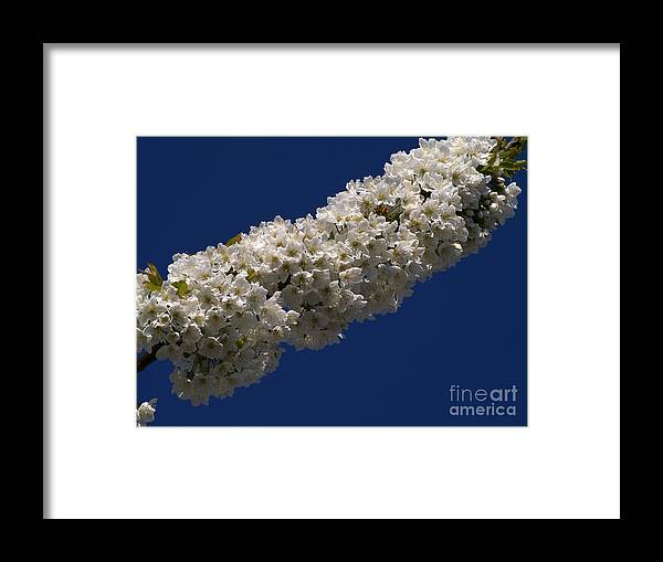 Background Framed Print featuring the photograph Cherry Blossom by Odon Czintos