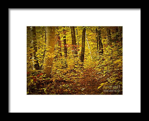 Countryside Framed Print featuring the photograph Fall Forest by Elena Elisseeva