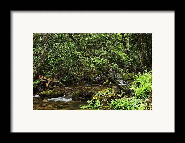 Rushing Mountain Stream Framed Print featuring the photograph Rushing Mountain Stream by Thomas R Fletcher