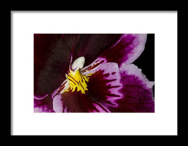 Orchid Framed Print featuring the photograph Exotic Orchids Of C Ribet by C Ribet