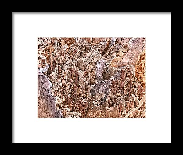 Mitochondrion Framed Print featuring the photograph Cardiac Muscle, Sem by Steve Gschmeissner