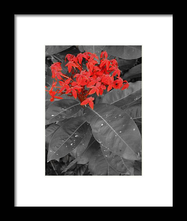 Flower Framed Print featuring the photograph RED by Beto Machado