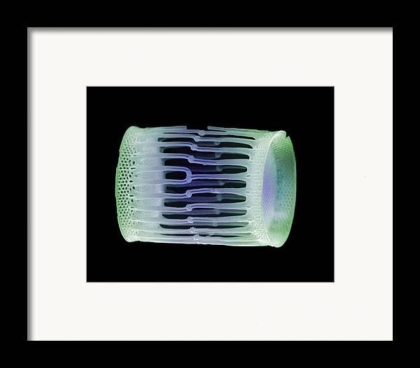 Diatom Framed Print featuring the photograph Diatom Alga, Sem by Steve Gschmeissner