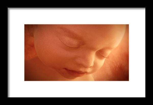 Human Framed Print featuring the photograph Human Foetus In The Womb, Artwork by Jellyfish Pictures