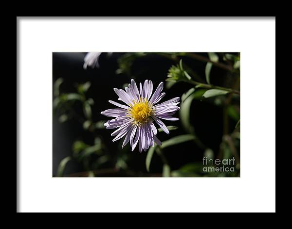 Framed Print featuring the photograph Title Here by Damian Brewka