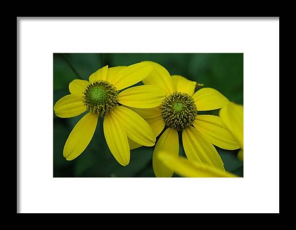 Framed Print featuring the photograph Flower by Gornganogphatchara Kalapun