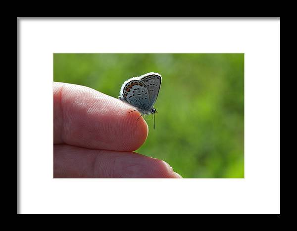 Butterfly Framed Print featuring the photograph A Butterfly On The Finger by Ulrich Kunst And Bettina Scheidulin
