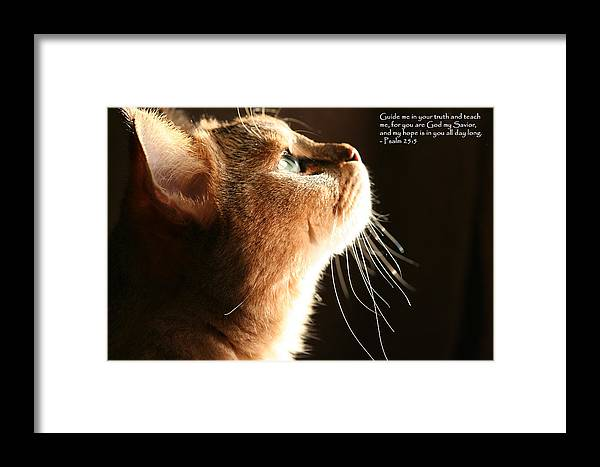 Cats Framed Print featuring the photograph A Cat Prayer by Wendi Curtis