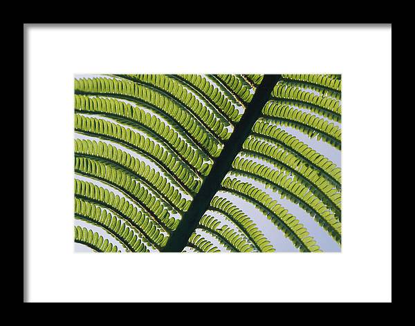 Kauai Island Framed Print featuring the photograph A Close View Of A Fern by George F. Mobley