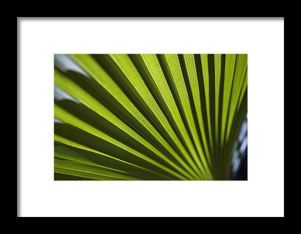 Bermuda Island Framed Print featuring the photograph A Close View Of Sunlight Shining by Todd Gipstein