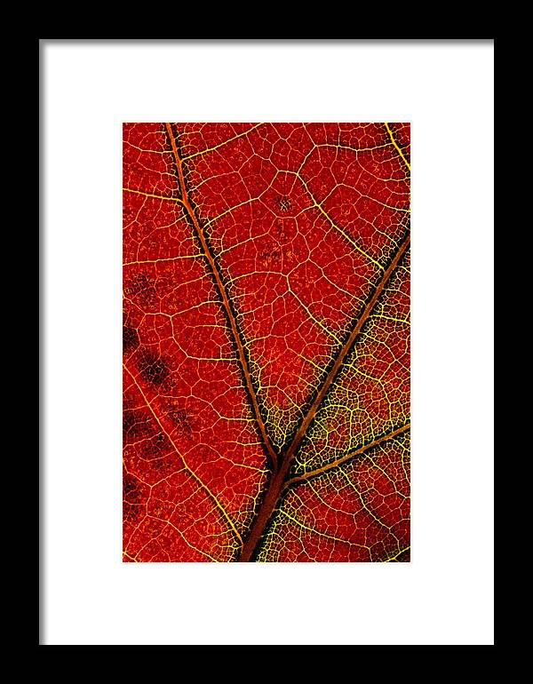 Shenandoah Valley Framed Print featuring the photograph A Close View Of The Veins Of A Colorful by George F. Mobley