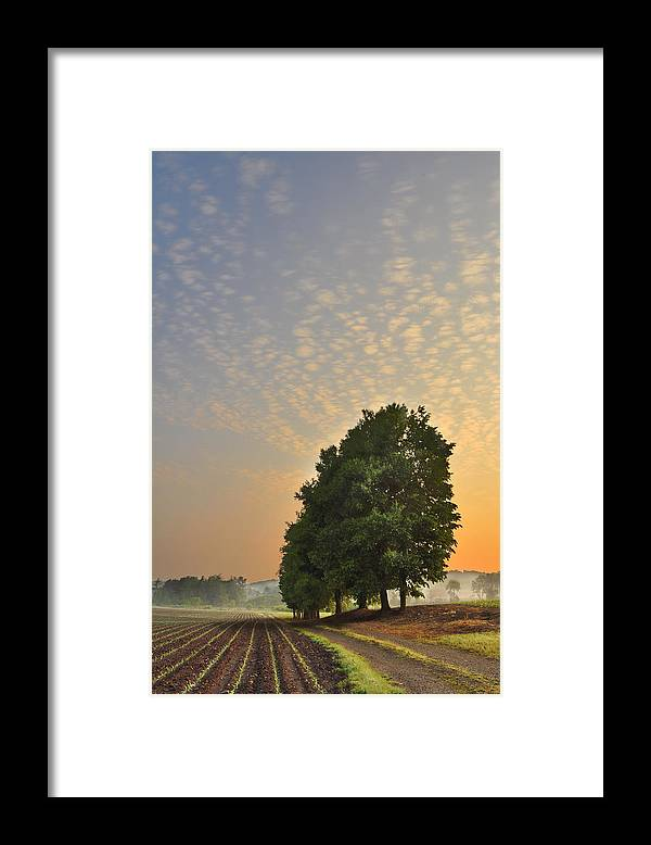 Landscape Framed Print featuring the photograph A Country Morning by Brian Fisher