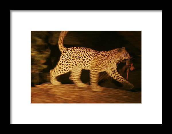 Okavango Delta Framed Print featuring the photograph A Day-old Baboon Clings To A Young by Beverly Joubert