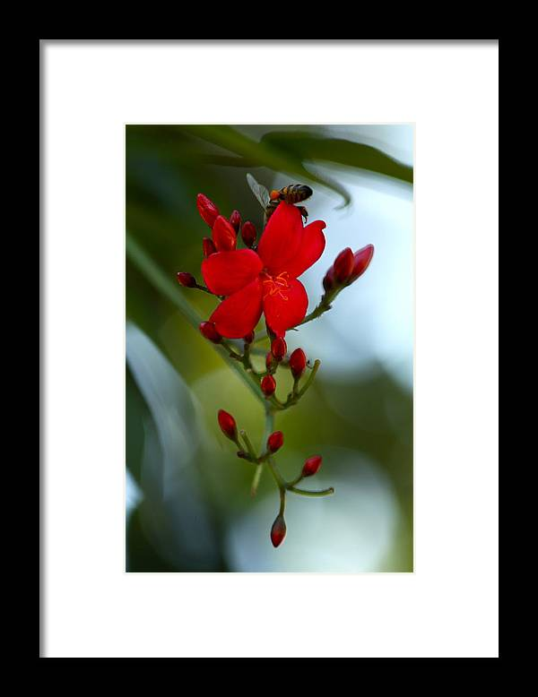 Red Framed Print featuring the photograph A Delicate Embrace by Karon Melillo DeVega