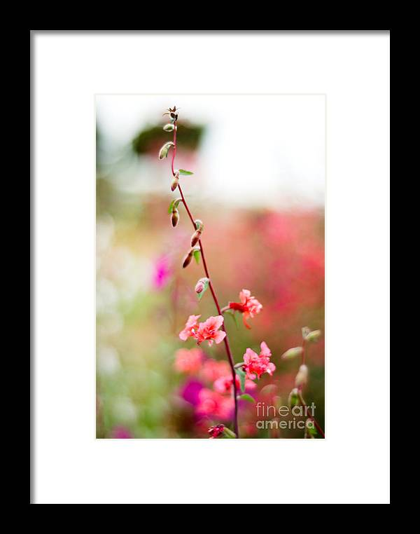 Flower Framed Print featuring the photograph A Delicate Rise by Syed Aqueel