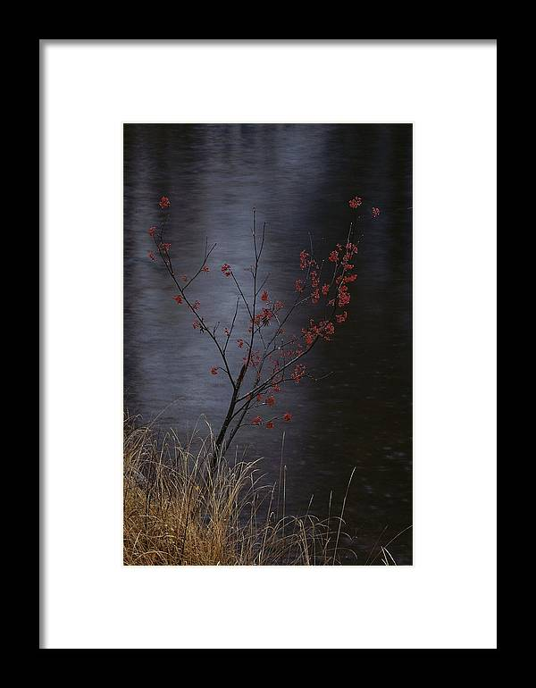Plants Framed Print featuring the photograph A Delicate Young Tree Blossoms by Mattias Klum