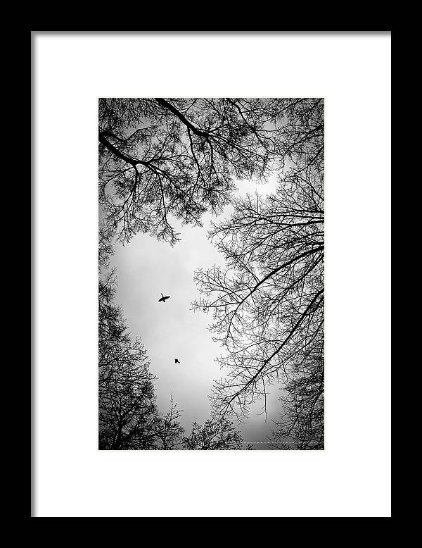 Duck Framed Print featuring the photograph A duck in the sky by Nikolay Krusser