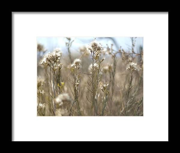 Landscape Framed Print featuring the photograph A Few Amongst Many by Humberto Laviera