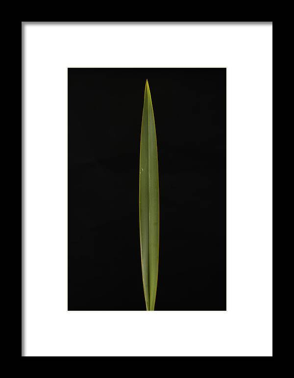 Photography Framed Print featuring the photograph A Flax Phormium Tenax by Joel Sartore