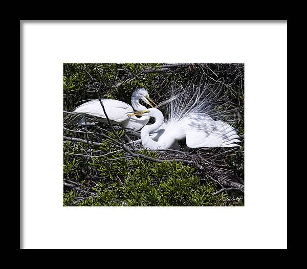 April Framed Print featuring the photograph A Happy Couple by Phill Doherty