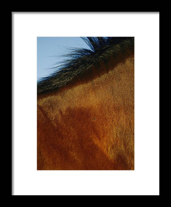 Animals Framed Print featuring the photograph A Horses Neck And Mane, Seen So Close by Mattias Klum