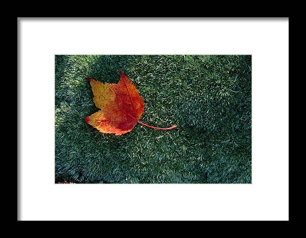 Shenandoah Valley Framed Print featuring the photograph A Maple Leaf Lies On Emerald Moss by George F. Mobley