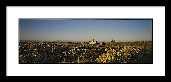 Panoramic Views Framed Print featuring the photograph A Panoramic View Of A Vineyard by Kenneth Garrett