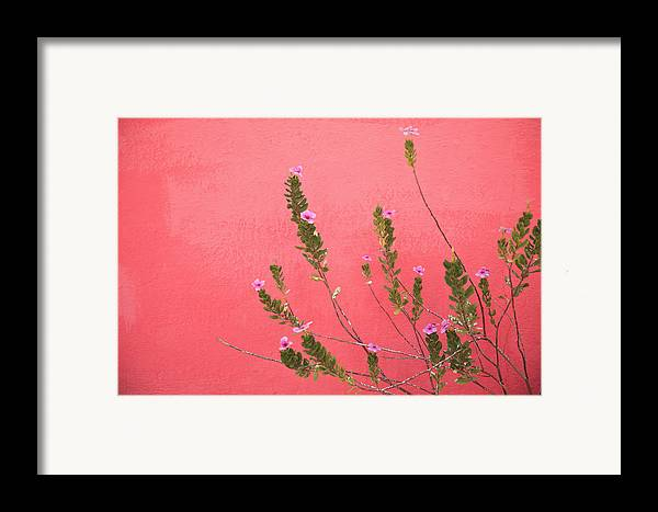 Building Framed Print featuring the photograph A Pink Flowering Plant Growing Beside A by Stuart Westmorland