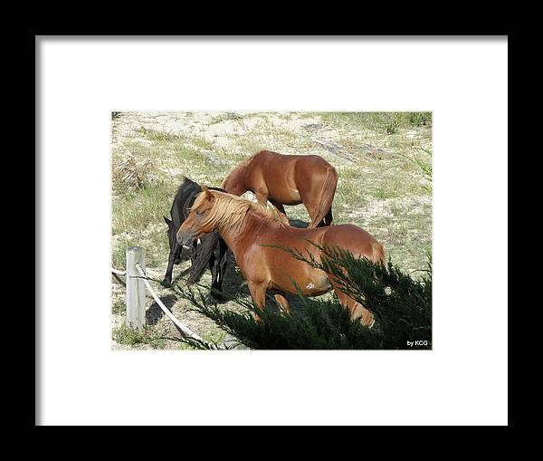 Mares Framed Print featuring the photograph A Proud Stallion With His Mares by Kim Galluzzo Wozniak